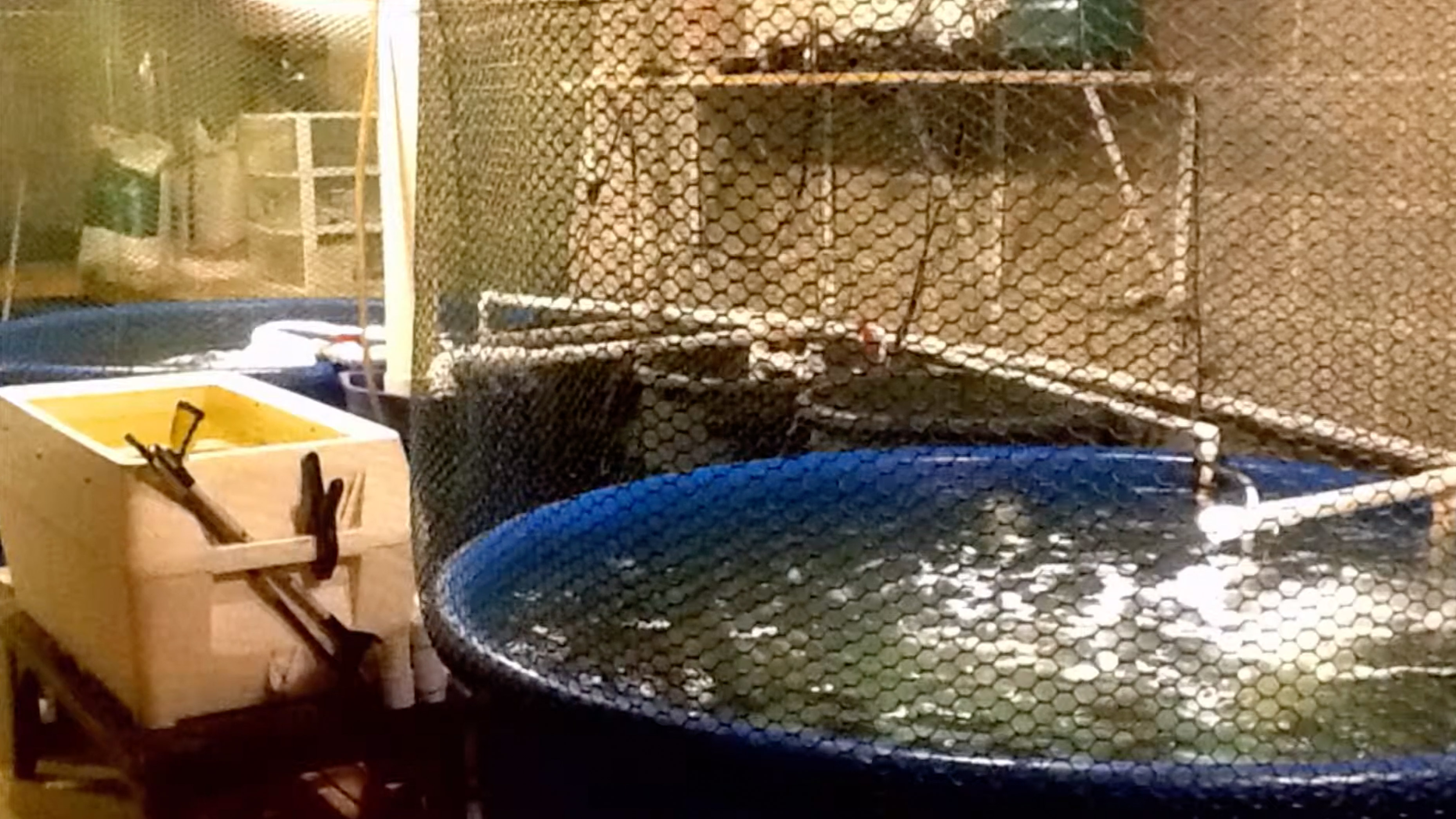 Image of fish tanks in the home basement of Ideal Fish CEO Eric Pedersen