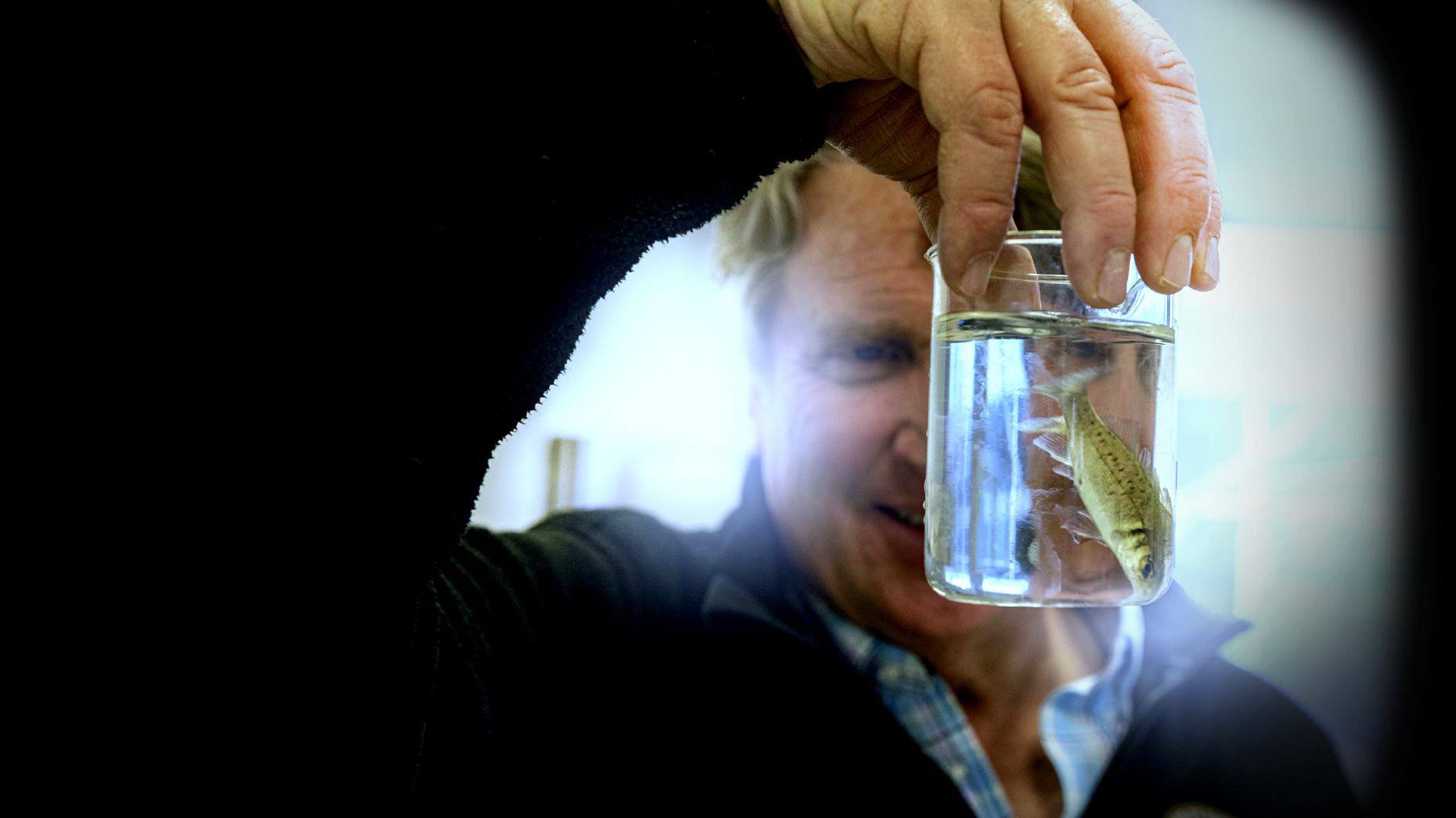Eric Pedersen looks at one of his branzino in a beaker at the Ideal Fish facility in Waterbury
