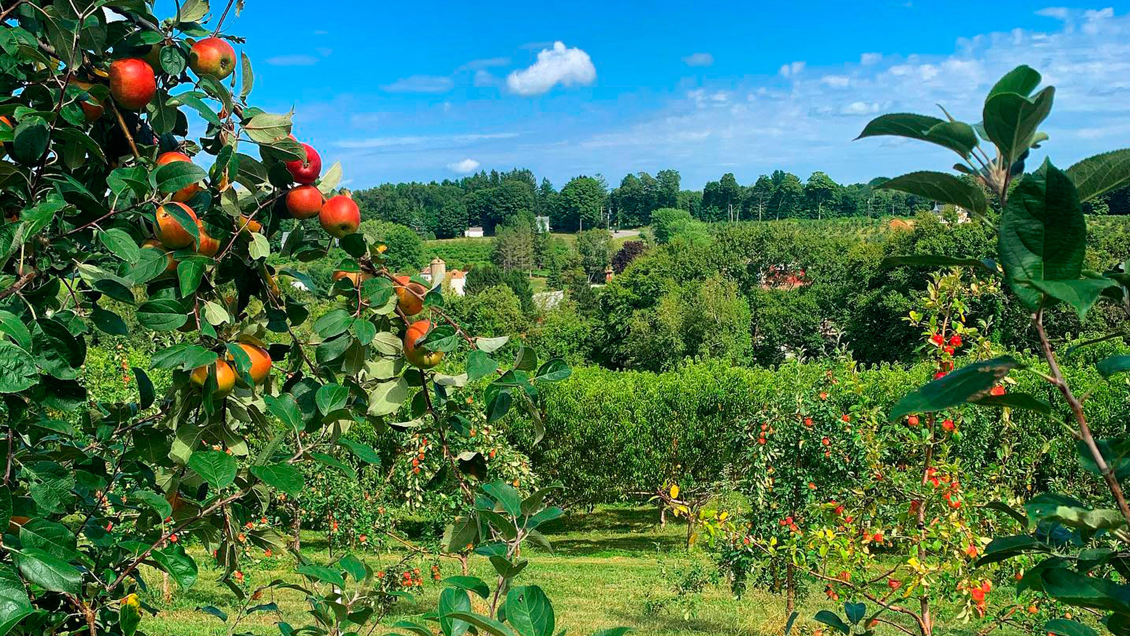 View of the orchards at March Farm in Bethlehem, Connecticut
