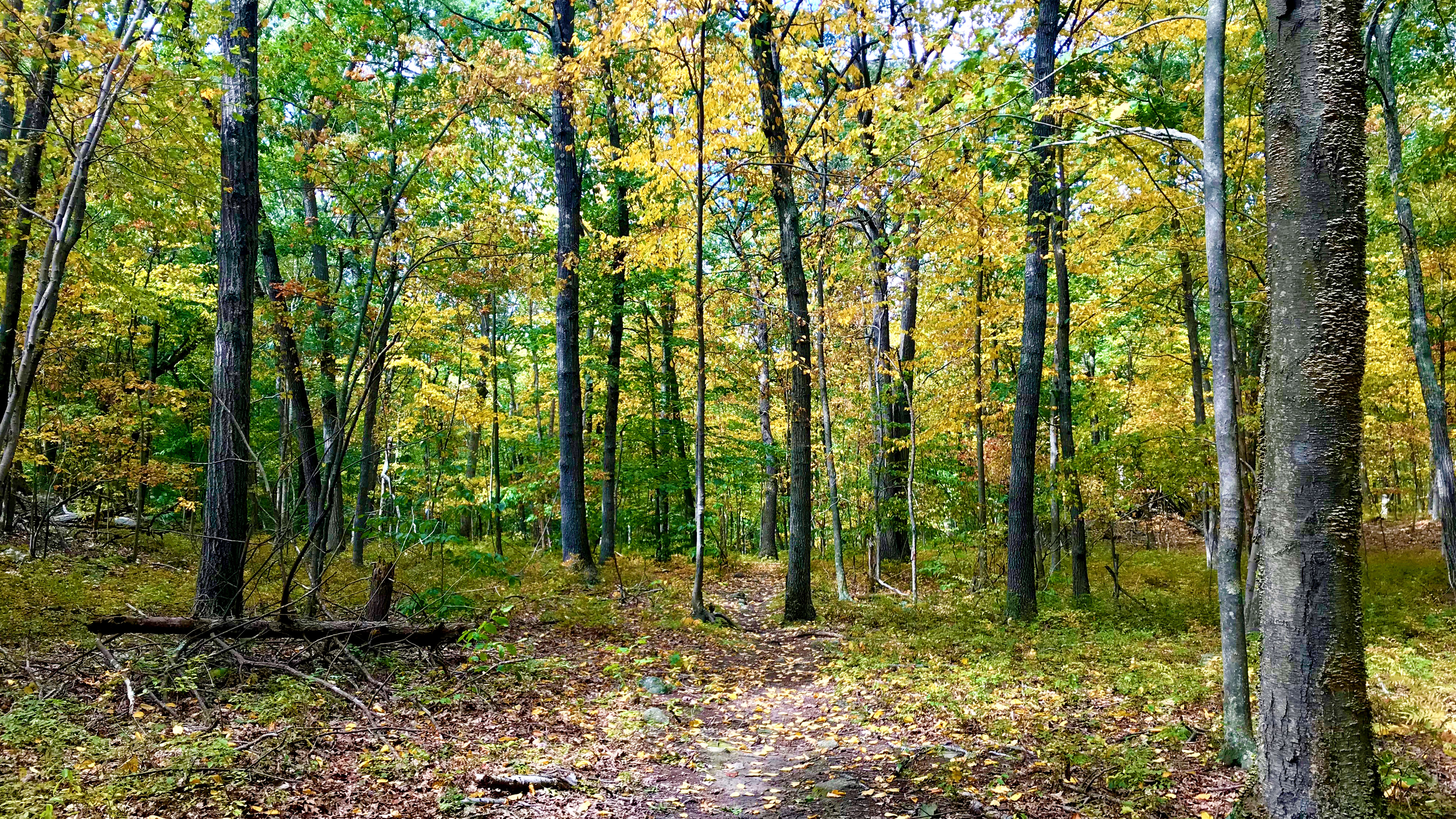 View of a walking trail in the Naugatuck State Forest